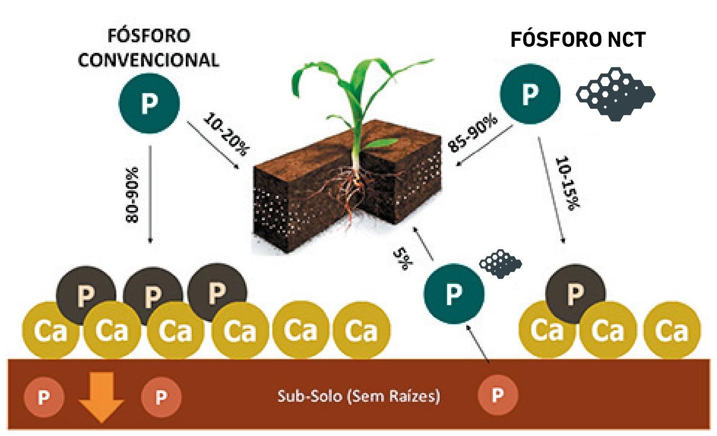 Imagem com o exemplo da produção convencional em comparação com produção com MCT, no macronutriente fósforo