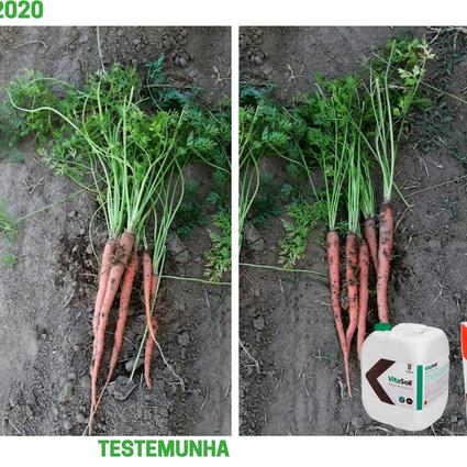 Agroglobal: Demonstração de eficácia MycoUp360 + VitaSoil